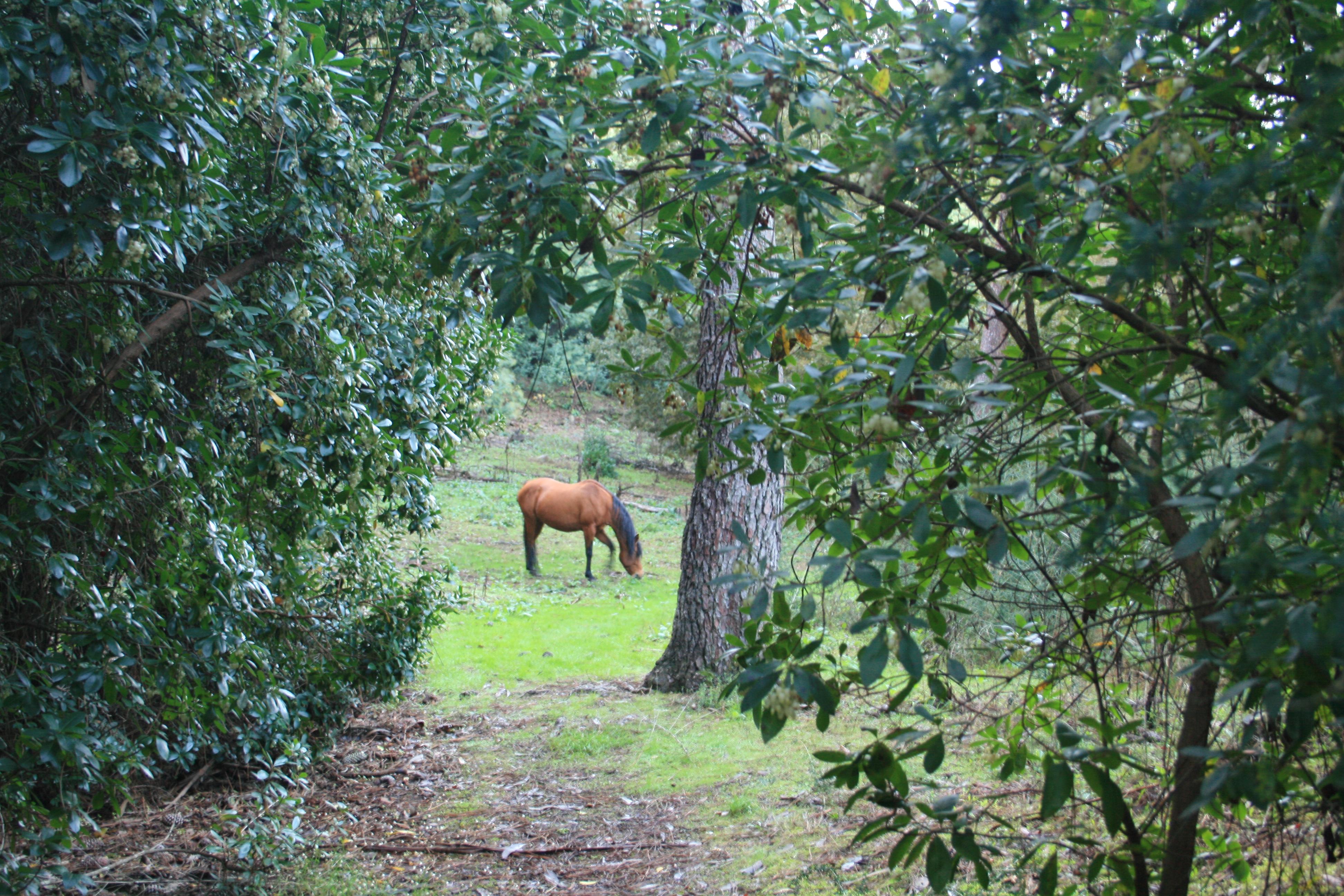 Bosque Ridimoas. Naturavia
